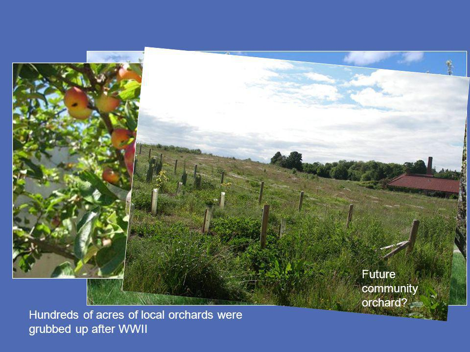 Hundreds of acres of local orchards were grubbed up after WWII Future community orchard?