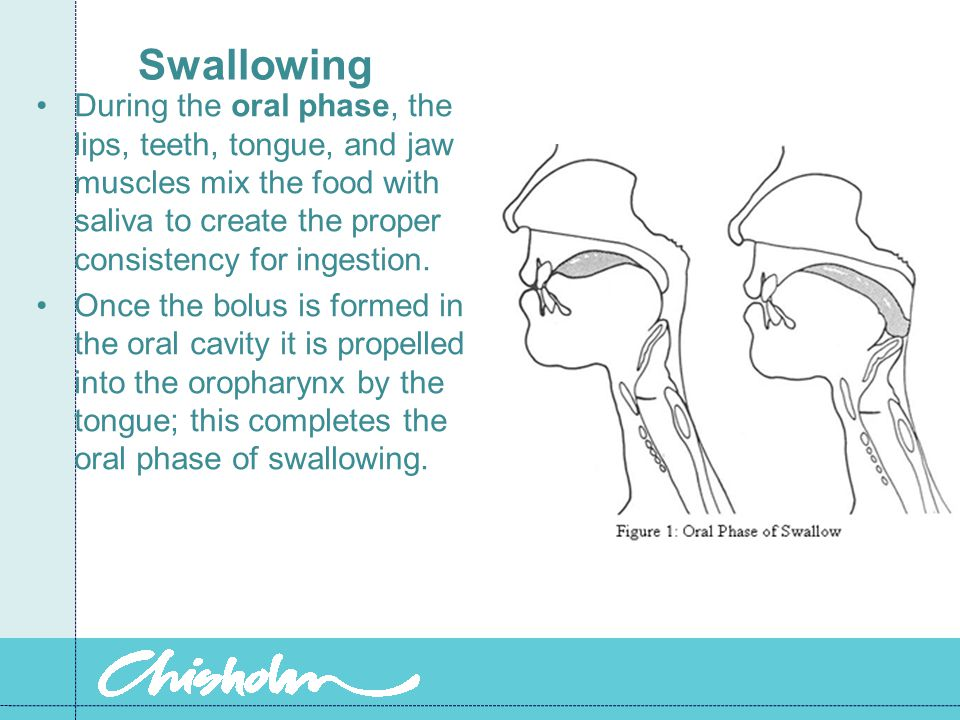 Swallowing During the oral phase, the lips, teeth, tongue, and jaw muscles mix the food with saliva to create the proper consistency for ingestion. On