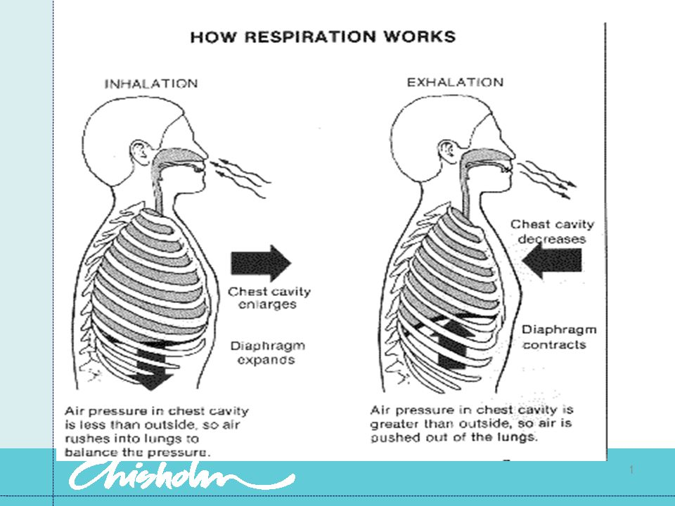 Factors necessary for respiration Adequate O2 in the atmosphere A functioning respiratory tract Functioning thoracic muscles and nerves to control the thoracic cage Blood to transport the gases Capillaries in close proximity to the cells to allow the exchange of gases.