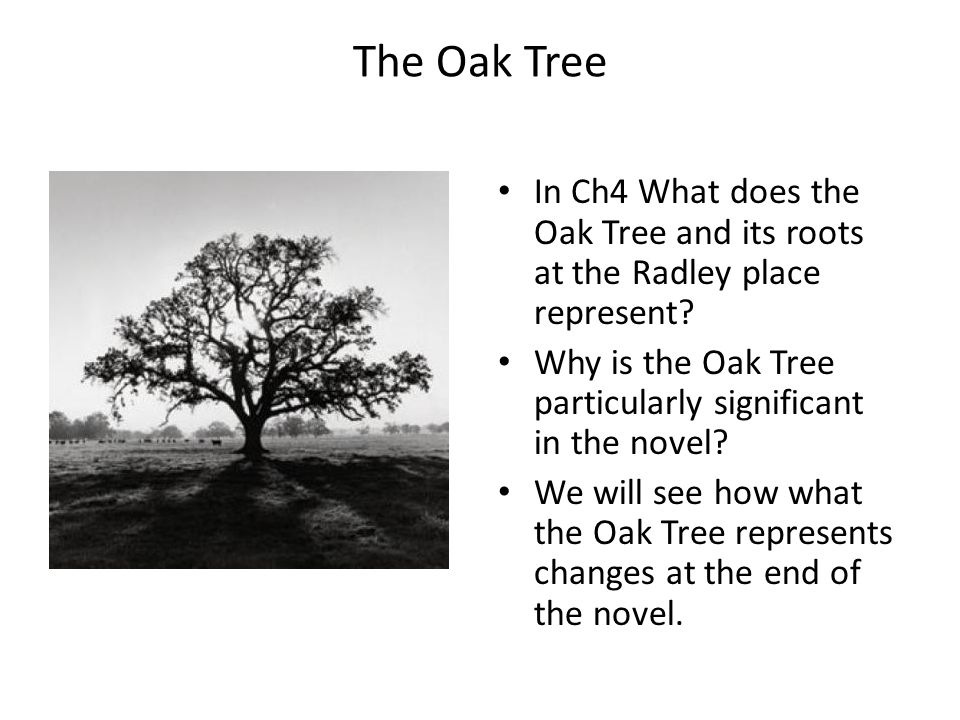The Oak Tree In Ch4 What does the Oak Tree and its roots at the Radley place represent? Why is the Oak Tree particularly significant in the novel? We