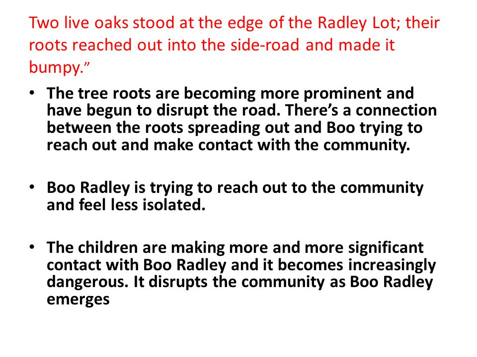 """Two live oaks stood at the edge of the Radley Lot; their roots reached out into the side-road and made it bumpy. """" The tree roots are becoming more pr"""