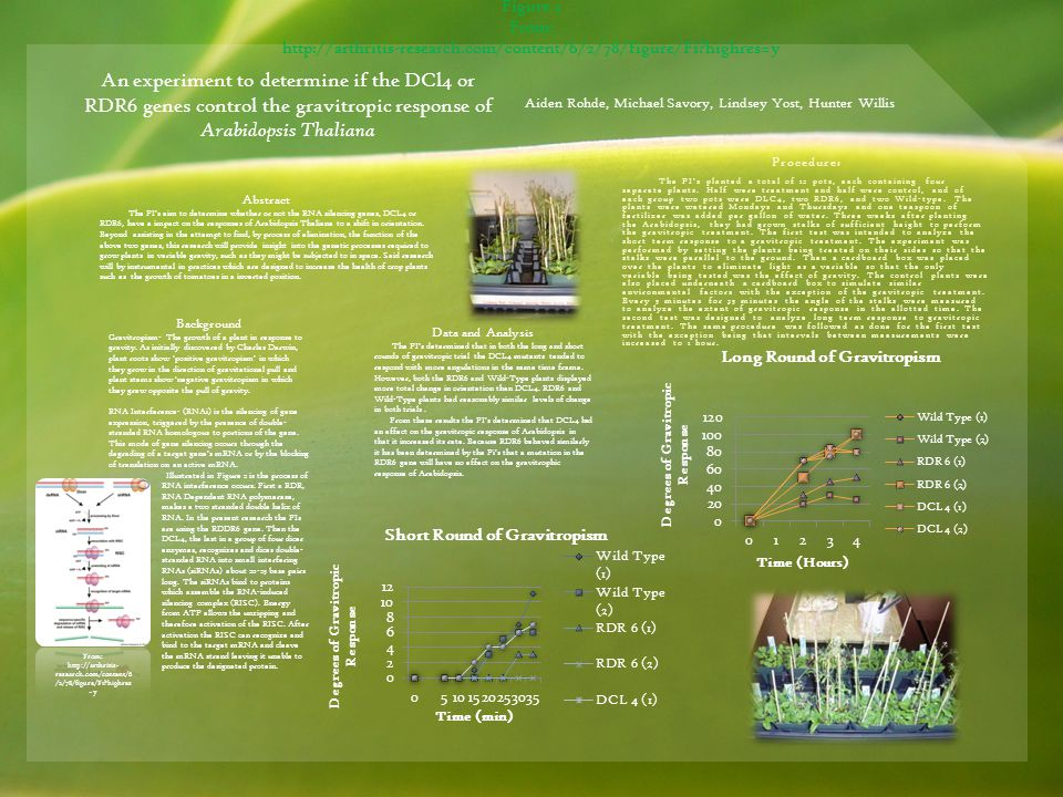 An experiment to determine if the DCl4 or RDR6 genes control the gravitropic response of Arabidopsis Thaliana Aiden Rohde, Michael Savory, Lindsey Yost, Hunter Willis Abstract The PI's aim to determine whether or not the RNA silencing genes, DCL4 or RDR6, have a impact on the responses of Arabidopsis Thaliana to a shift in orientation.
