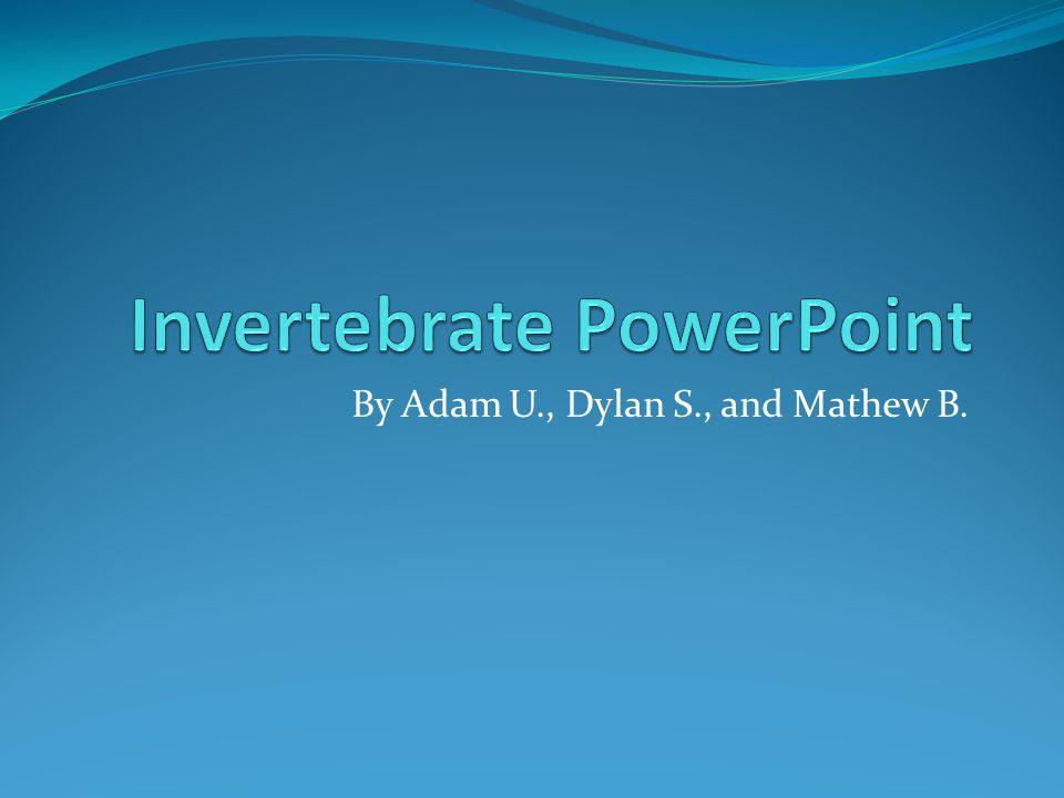 By Adam U., Dylan S., and Mathew B.