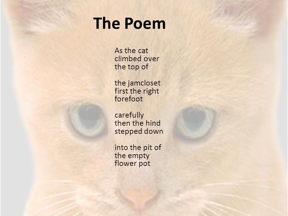 The Poem As the cat climbed over the top of the jamcloset first the right forefoot carefully then the hind stepped down into the pit of the empty flow