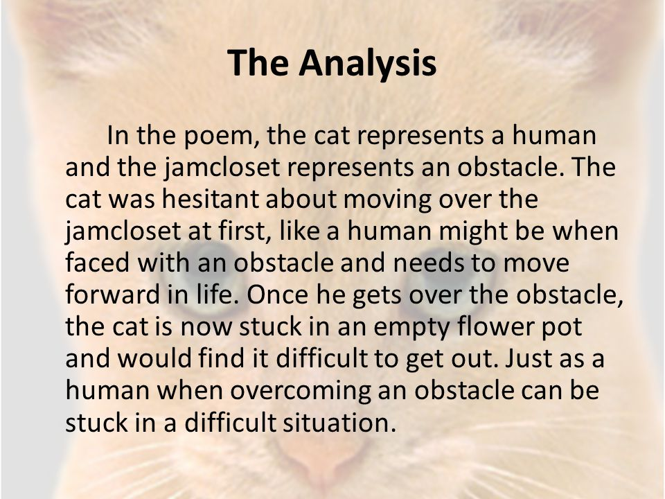 The Analysis In the poem, the cat represents a human and the jamcloset represents an obstacle. The cat was hesitant about moving over the jamcloset at
