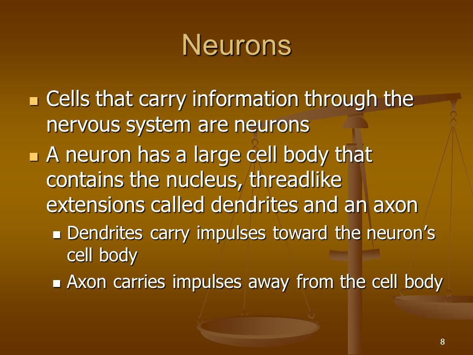 9 (2) Nerve impulses begin in a dendrite, move toward the cell body and then move down the axon Nerve impulses begin in a dendrite, move toward the cell body and then move down the axon A neuron can have many dendrites but it has only one axon A neuron can have many dendrites but it has only one axon An axon can have more than one tip so the impulse can go to more than one cell An axon can have more than one tip so the impulse can go to more than one cell Axon and dendrites are sometimes called nerve fibers Axon and dendrites are sometimes called nerve fibers