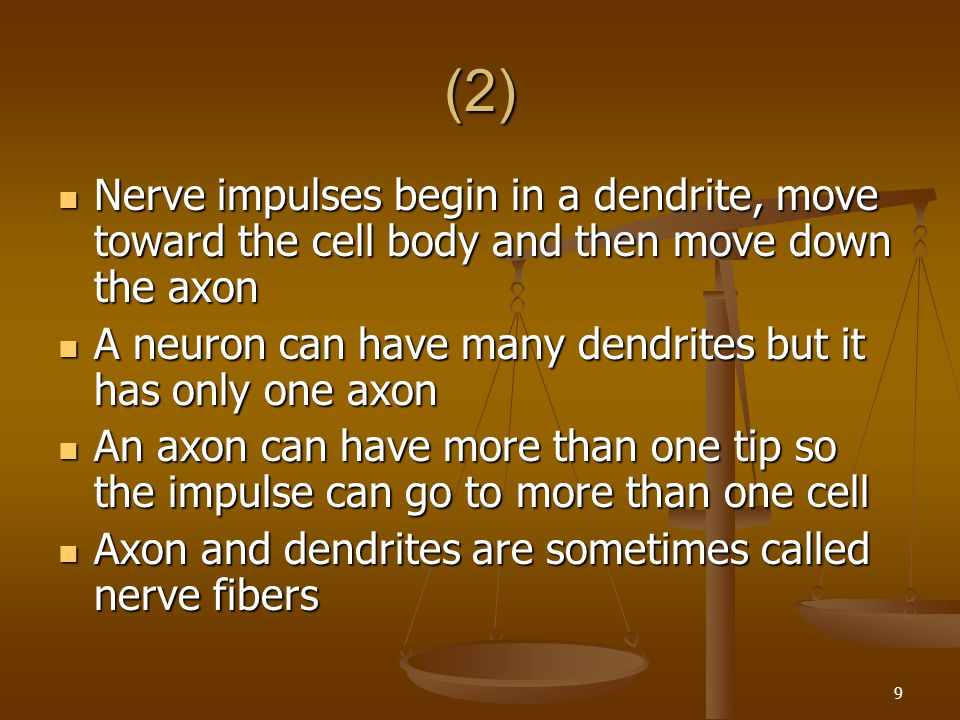 9 (2) Nerve impulses begin in a dendrite, move toward the cell body and then move down the axon Nerve impulses begin in a dendrite, move toward the ce