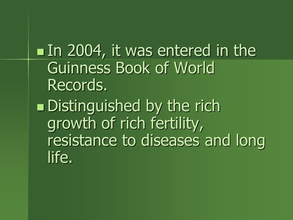 In 2004, it was entered in the Guinness Book of World Records.