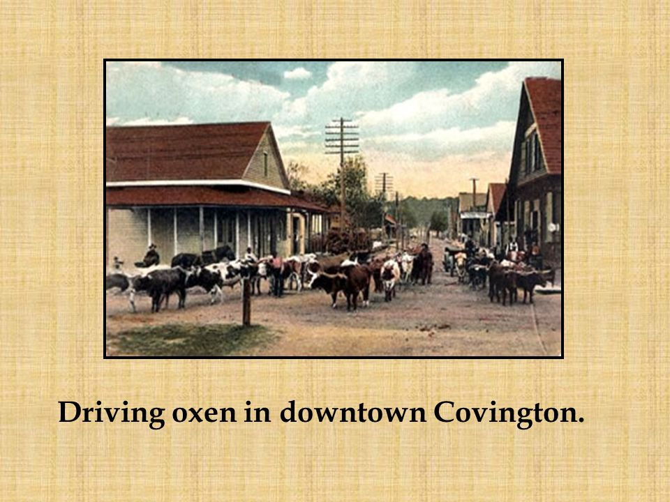 Driving oxen in downtown Covington.