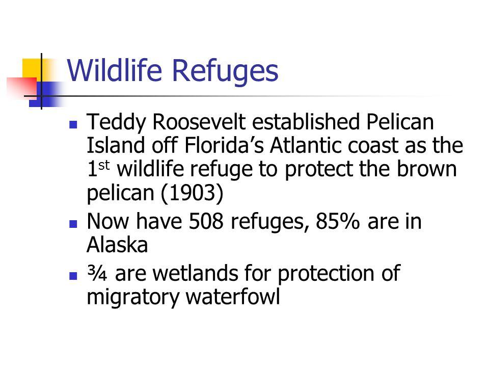 Wildlife Refuges Teddy Roosevelt established Pelican Island off Florida's Atlantic coast as the 1 st wildlife refuge to protect the brown pelican (190