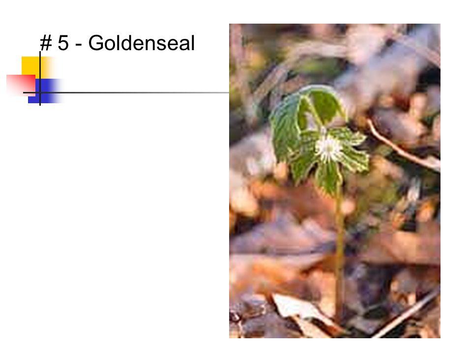 # 5 - Goldenseal