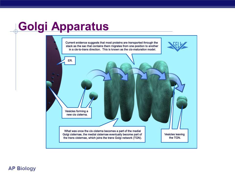 AP Biology Golgi Apparatus cis