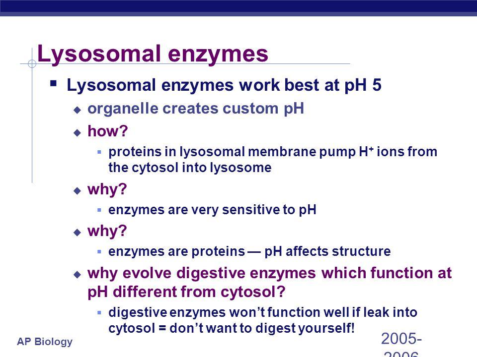 AP Biology 2005- 2006 Lysosomal enzymes  Lysosomal enzymes work best at pH 5  organelle creates custom pH  how?  proteins in lysosomal membrane pu