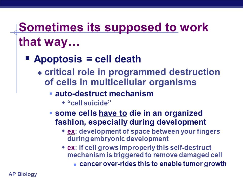 AP Biology Sometimes its supposed to work that way…  Apoptosis = cell death  critical role in programmed destruction of cells in multicellular organ