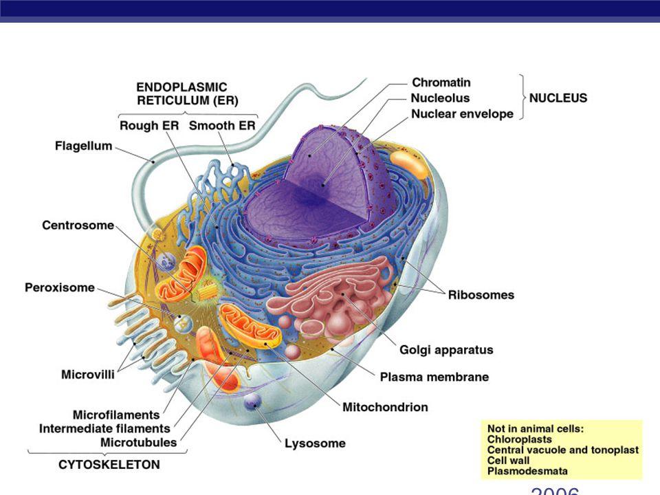 AP Biology 2005- 2006