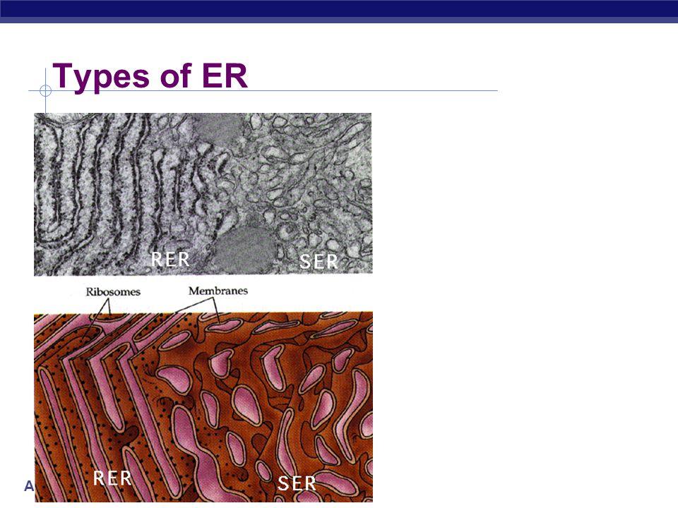 AP Biology Types of ER