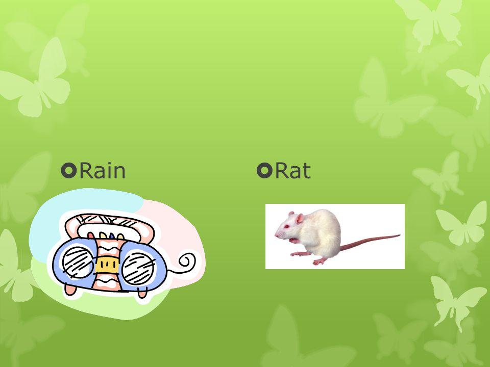  Rain  Rat