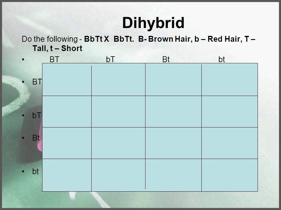 Dihybrid Do the following - BbTt X BbTt. B- Brown Hair, b – Red Hair, T – Tall, t – Short BTbTBtbt BT bT Bt bt