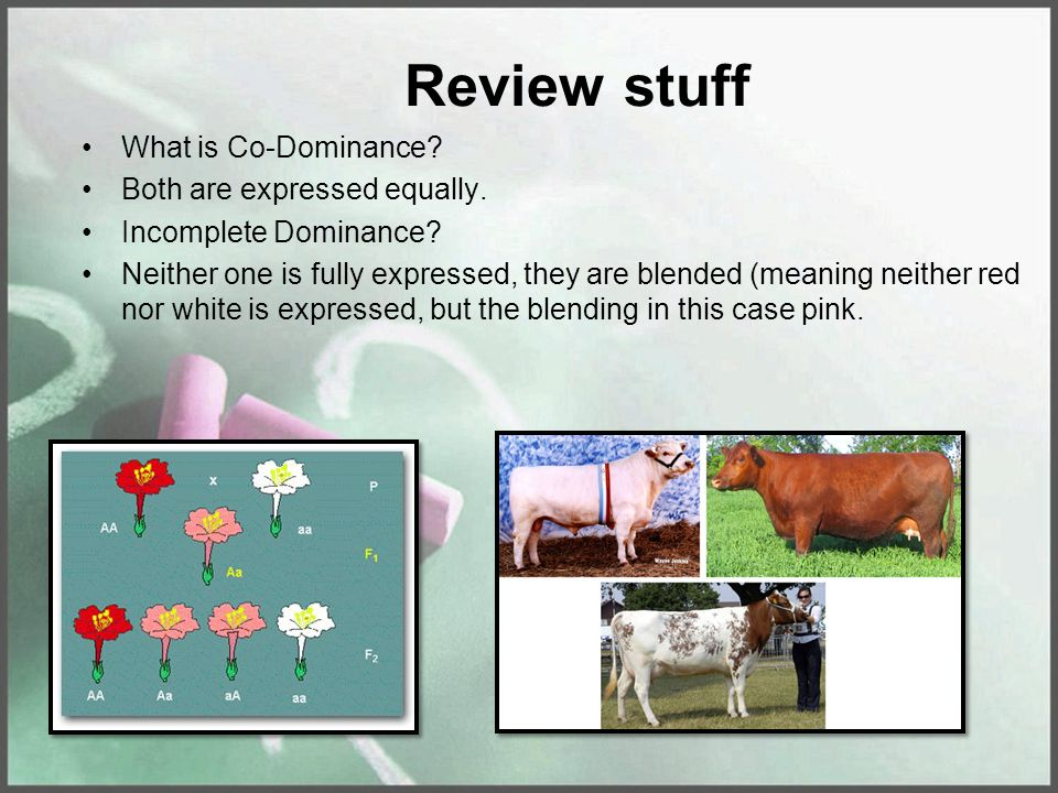 Review stuff What is Co-Dominance. Both are expressed equally.