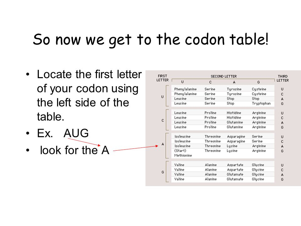 Now move to the second letter of your codon which is 'U' Look at the top of the table where you see the title '2nd letter' Find the letter 'U' and follow it down until it intersects with the letter 'A' from the left side.