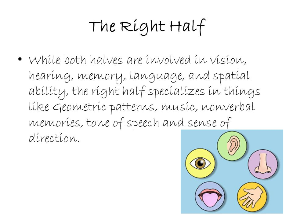 The Right Half While both halves are involved in vision, hearing, memory, language, and spatial ability, the right half specializes in things like Geometric patterns, music, nonverbal memories, tone of speech and sense of direction.