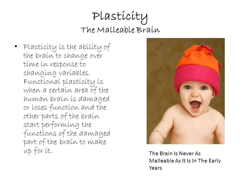 Plasticity The Malleable Brain Plasticity is the ability of the brain to change over time in response to changing variables.