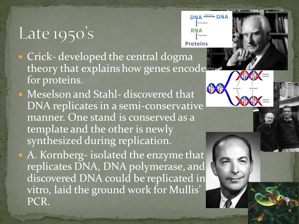 Crick- developed the central dogma theory that explains how genes encode for proteins.