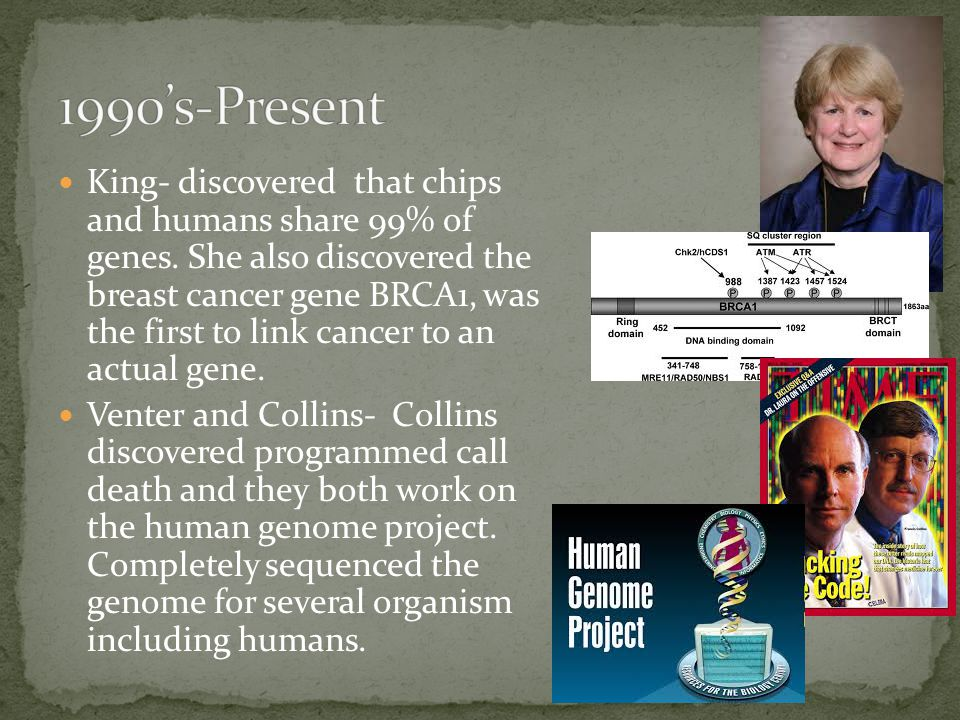 King- discovered that chips and humans share 99% of genes.