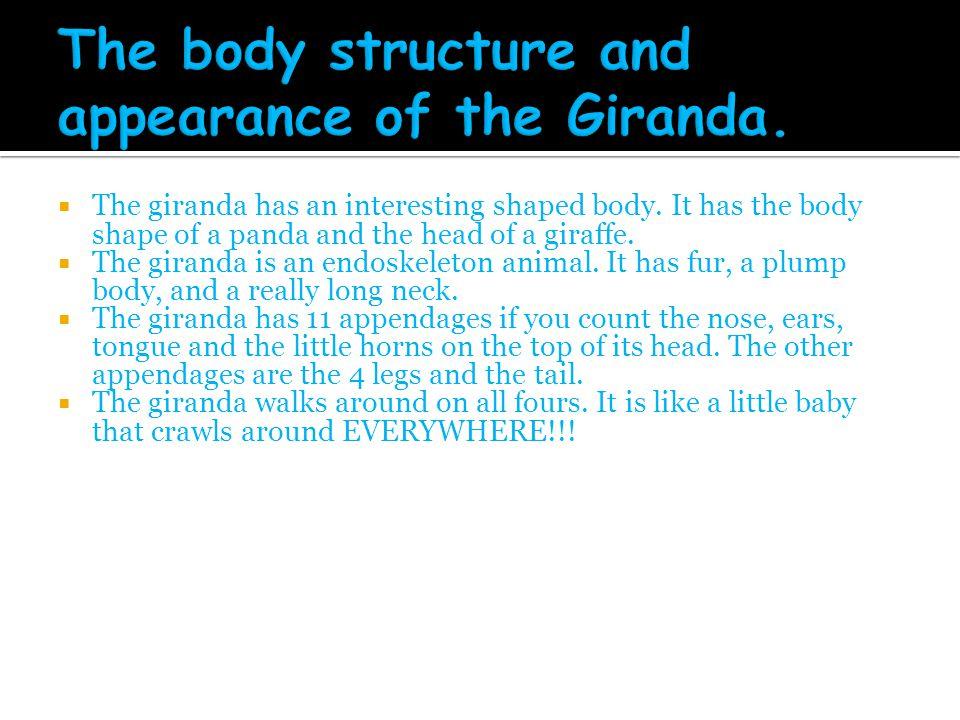  The giranda has an interesting shaped body. It has the body shape of a panda and the head of a giraffe.  The giranda is an endoskeleton animal. It