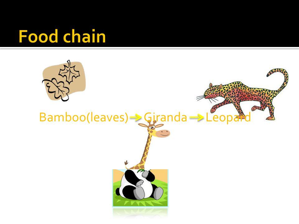 Bamboo(leaves) Giranda Leopard
