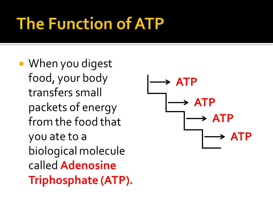  When you digest food, your body transfers small packets of energy from the food that you ate to a biological molecule called Adenosine Triphosphate (ATP).