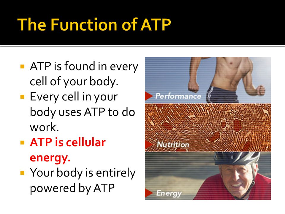  ATP is found in every cell of your body.  Every cell in your body uses ATP to do work.