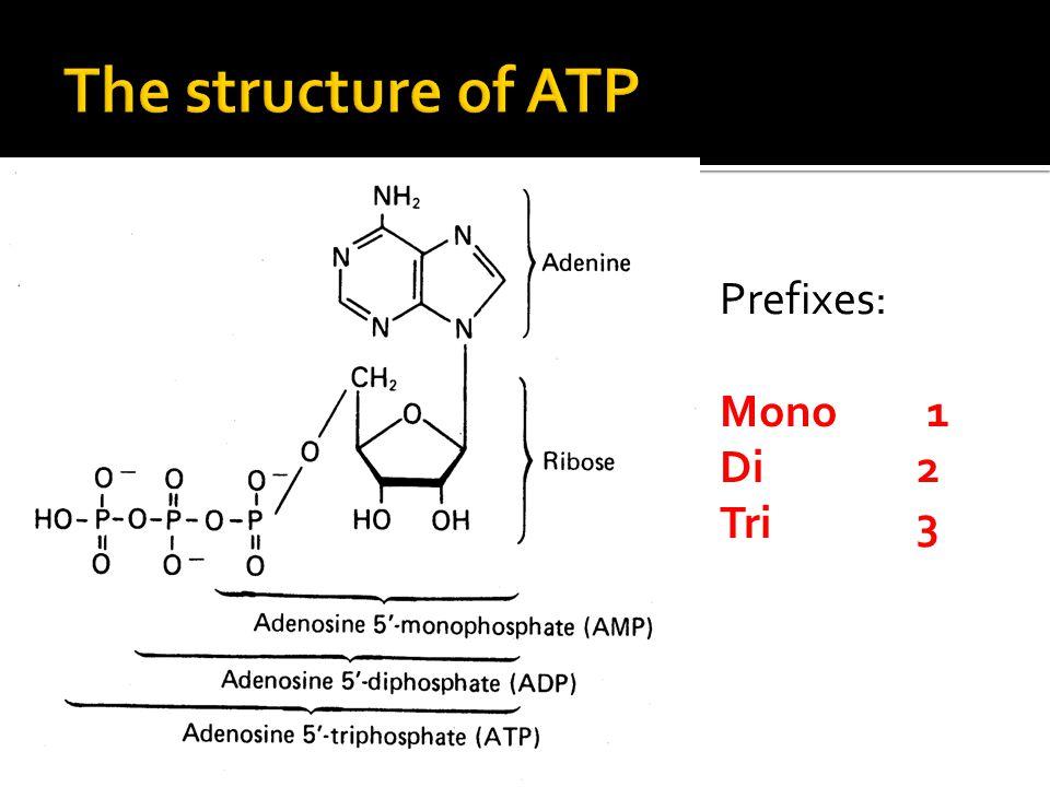 Prefixes: Mono 1 Di2 Tri 3