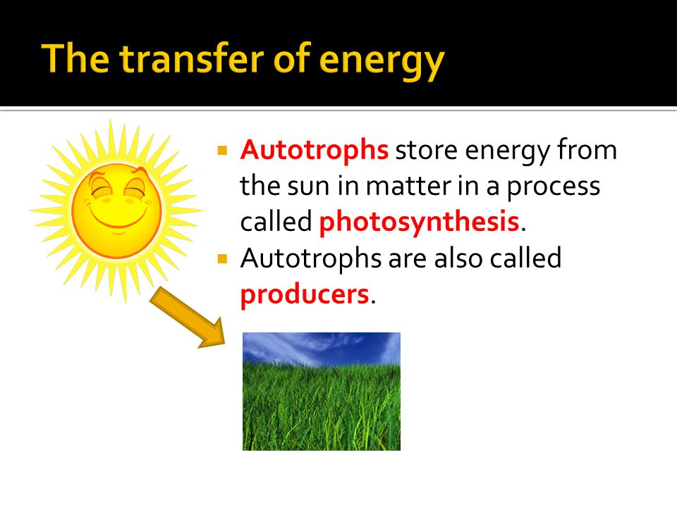  Autotrophs store energy from the sun in matter in a process called photosynthesis.
