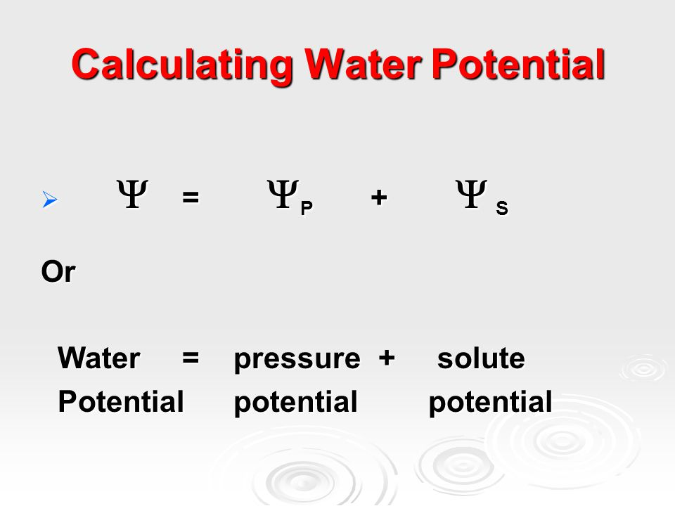 Calculating Water Potential   =  P +  S Or Water = pressure + solute Water = pressure + solute Potential potential potential Potential potential potential