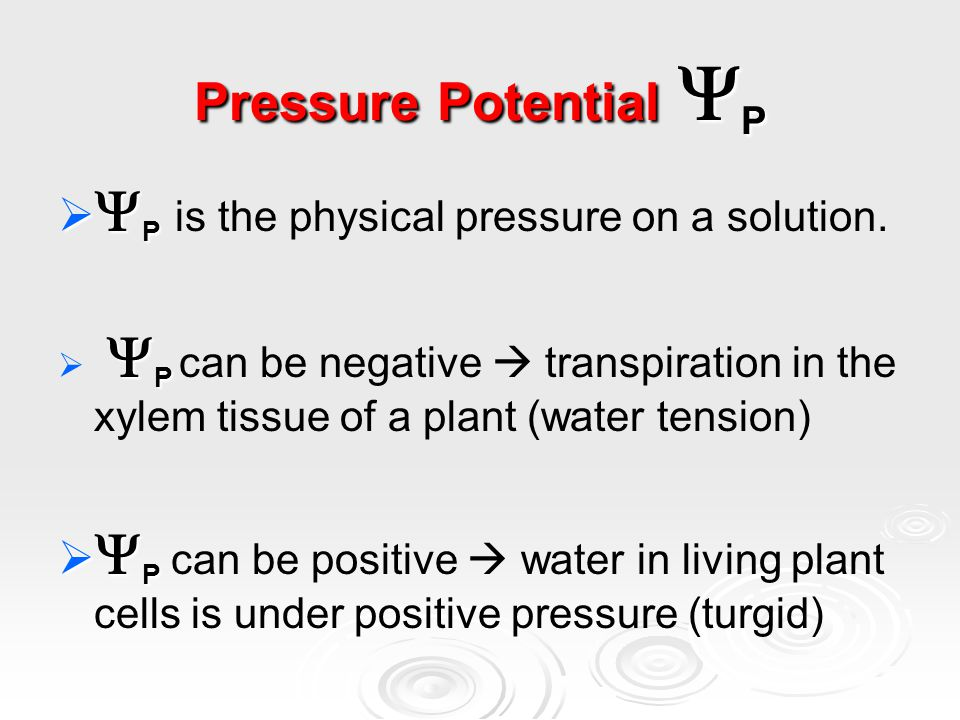 Pressure Potential  P   P   P is the physical pressure on a solution.