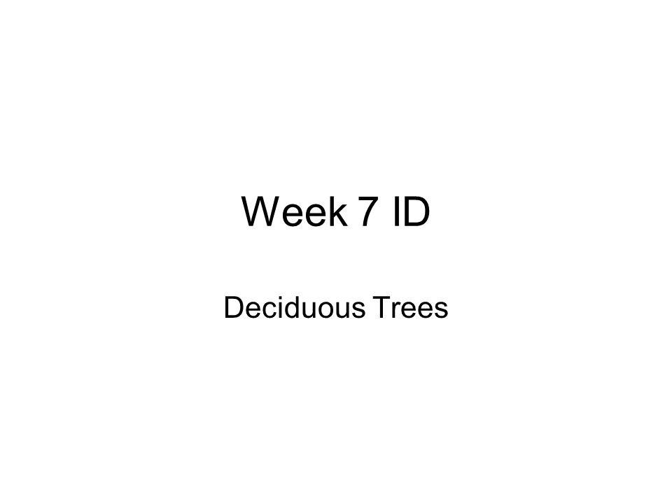 Sweetgum Liquidambar strycaflua Height: 60-100' Spread: 50-75' 5-7 lobed, star shaped leaves Synacarp in fall and winter Part shade-sun