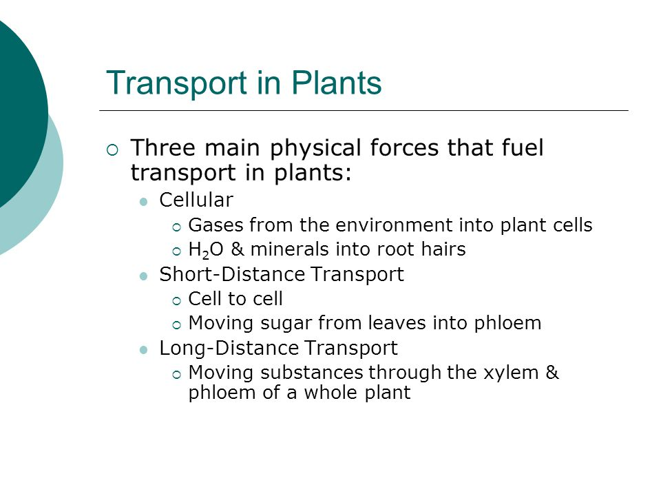 Transport in Plants  Three main physical forces that fuel transport in plants: Cellular  Gases from the environment into plant cells  H 2 O & miner
