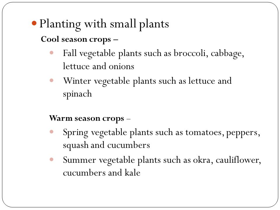 Planting with small plants Cool season crops – Fall vegetable plants such as broccoli, cabbage, lettuce and onions Winter vegetable plants such as let