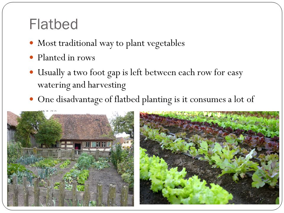 Flatbed Most traditional way to plant vegetables Planted in rows Usually a two foot gap is left between each row for easy watering and harvesting One disadvantage of flatbed planting is it consumes a lot of space