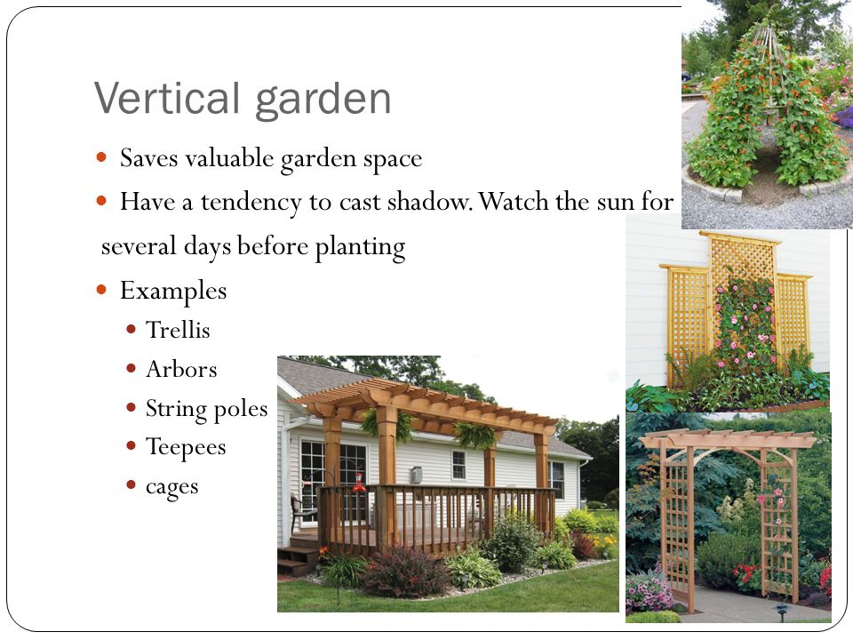 Vertical garden Saves valuable garden space Have a tendency to cast shadow. Watch the sun for several days before planting Examples Trellis Arbors Str