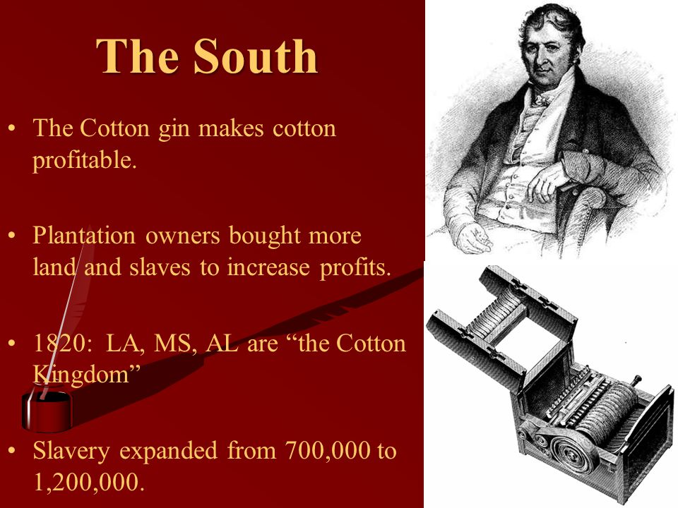The South The Cotton gin makes cotton profitable.