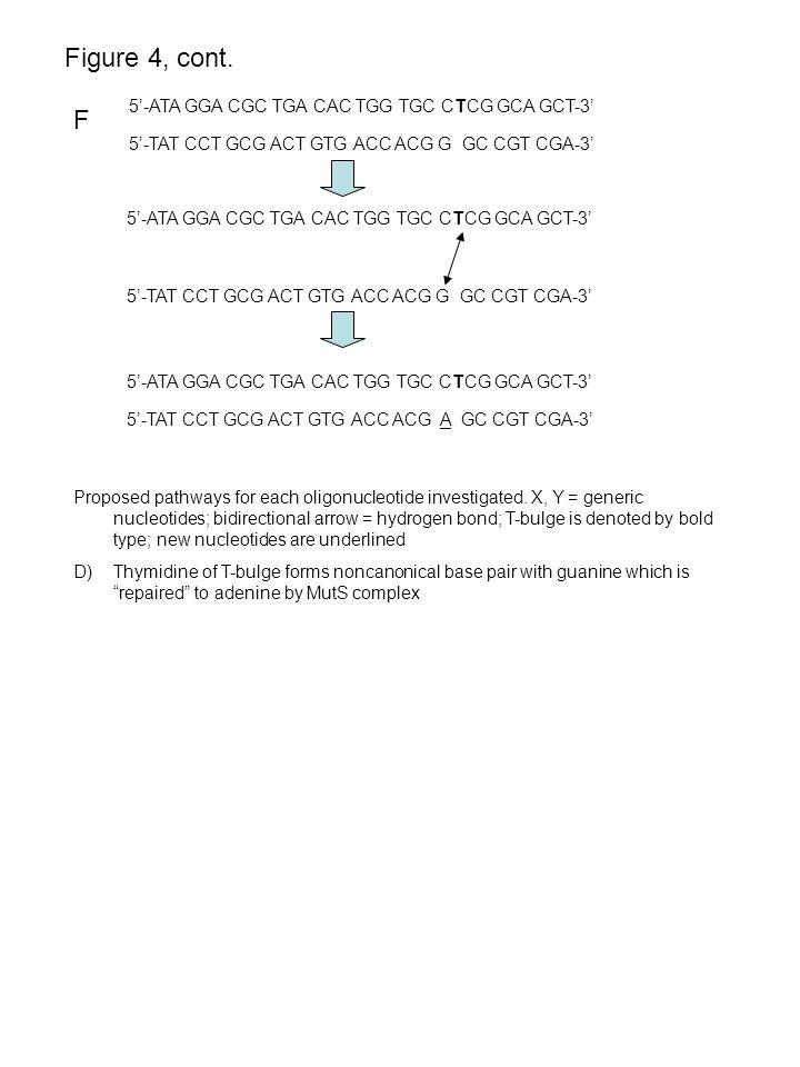 F Figure 4, cont. 5'-ATA GGA CGC TGA CAC TGG TGC CTCG GCA GCT-3' 5'-TAT CCT GCG ACT GTG ACC ACG G GC CGT CGA-3' 5'-ATA GGA CGC TGA CAC TGG TGC CTCG GC