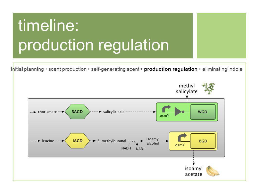 timeline: production regulation initial planning scent production self-generating scent production regulation eliminating indole