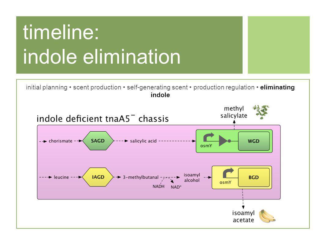 timeline: indole elimination initial planning scent production self-generating scent production regulation eliminating indole