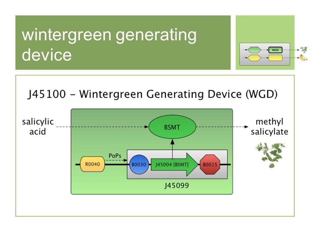 wintergreen generating device