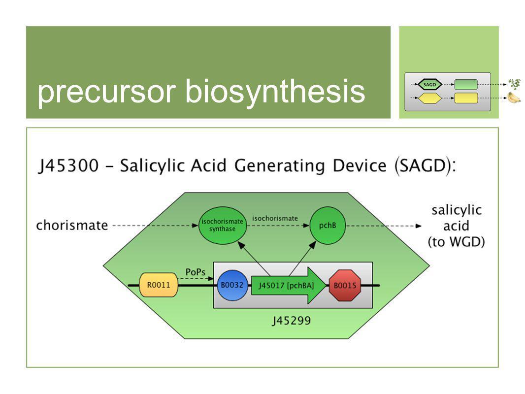 precursor biosynthesis
