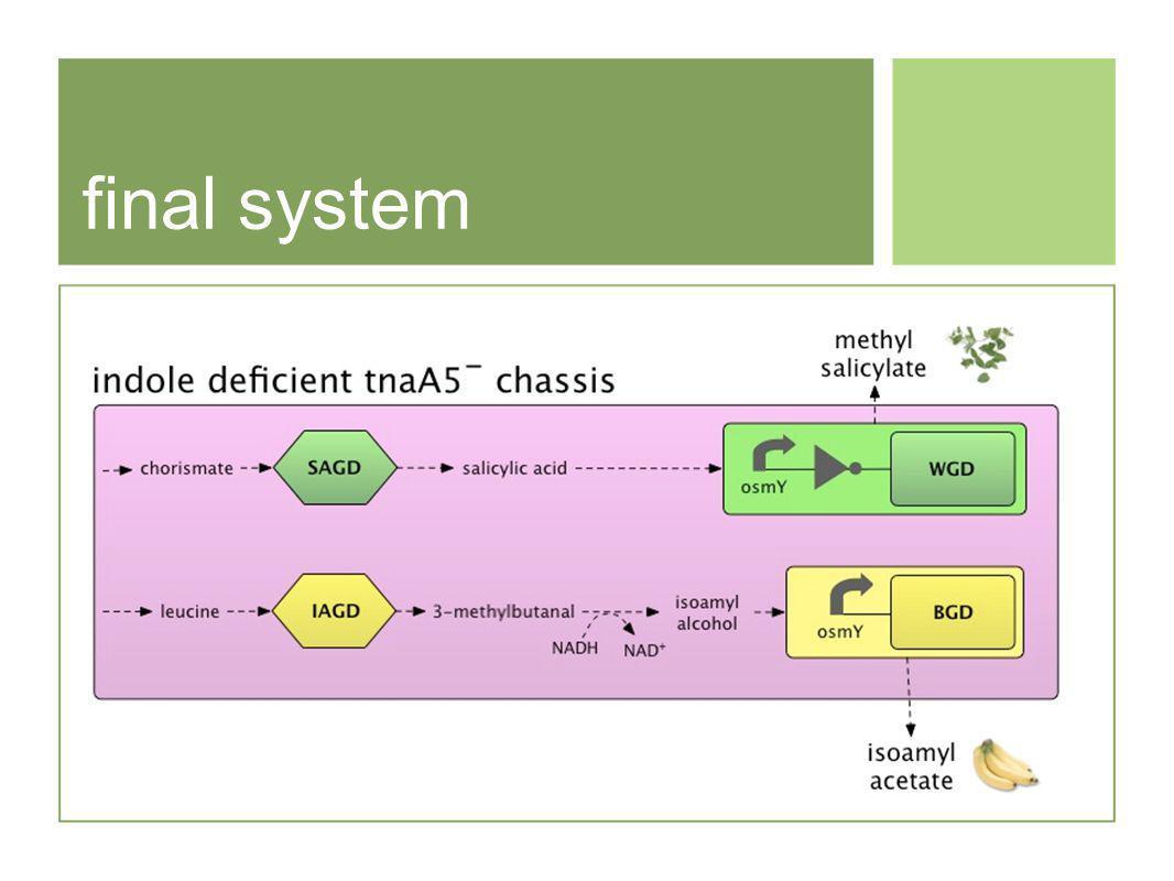 final system