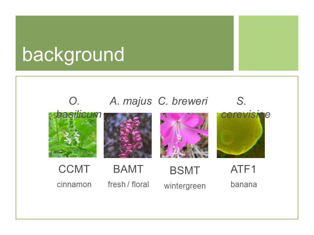 background A. majus BAMT fresh / floral BSMT wintergreen C. breweriS. cerevisiae ATF1 banana