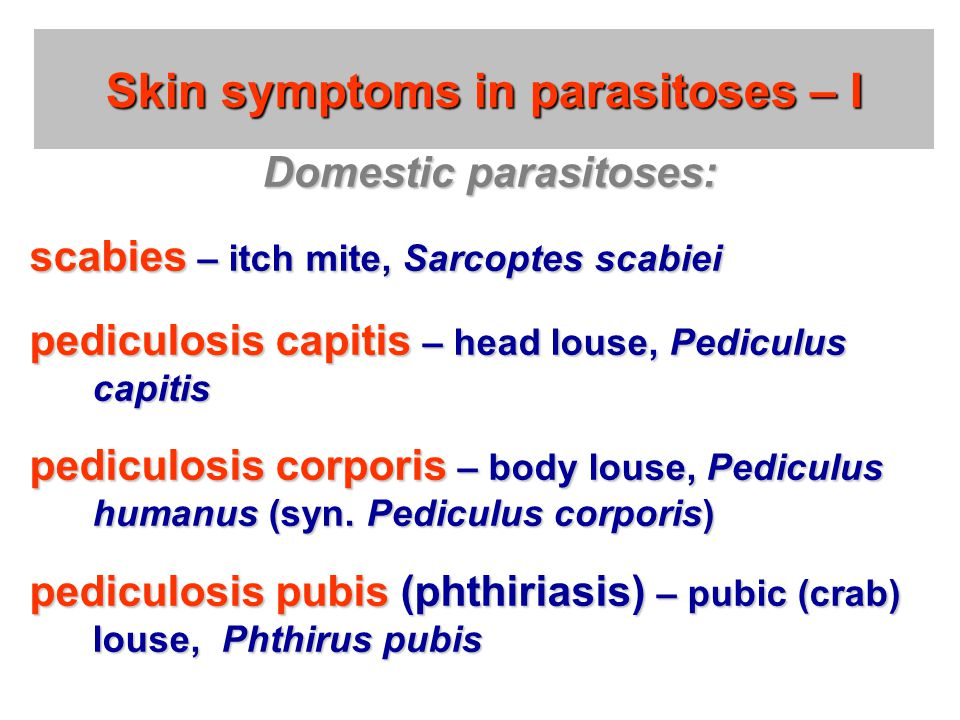 Skin symptoms in parasitoses – I Domestic parasitoses: scabies – itch mite, Sarcoptes scabiei pediculosis capitis – head louse, Pediculus capitis pedi